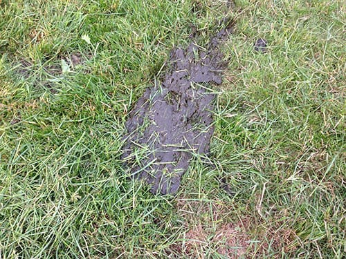 Photo of manure smeared by a mower when pre-graze topping of grass